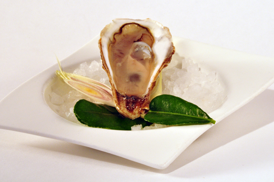 Harwigs Oyster